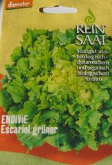 Biologisches Saatgut Endivie ESCARIOL GRÜNER, Chichorium endivia