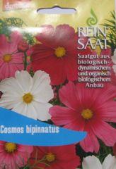 Biologisches Saatgut kbA Schmuckkörbchen (Cosmos bipinnatus) kbA