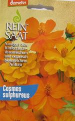 Biologisches Saatgut Cosmea orange, kbA Cosmos sulphureus