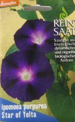 Biologisches Saatgut kbA Prachtwinde Star of Yelta, kbA Ipomoea purpurea