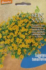 Biologisches Saatgut Zwergstudentenblume,kbA Tagetes tenuifolia