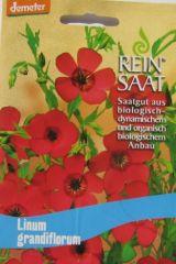 Biologisches Saatgut Roter Lein, Linum grandiflorum, kbA