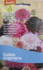 Biologisches Saatgut Witwenblume, kbA Scabiosa atropurpurea