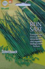 Biologisches Saatgut Schnittlauch grobröhrig. kbA Allium schoenoprasum