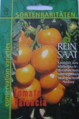 Tomate Valencia Lycopersicon esculentum Mill. ReinSaat
