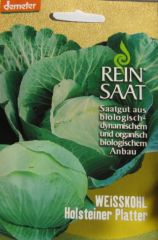 Biologisches Saatgut kbA Weißkraut HOLSTEINER PLATTER Brassica oleraceaL.convar capitavar.Alba